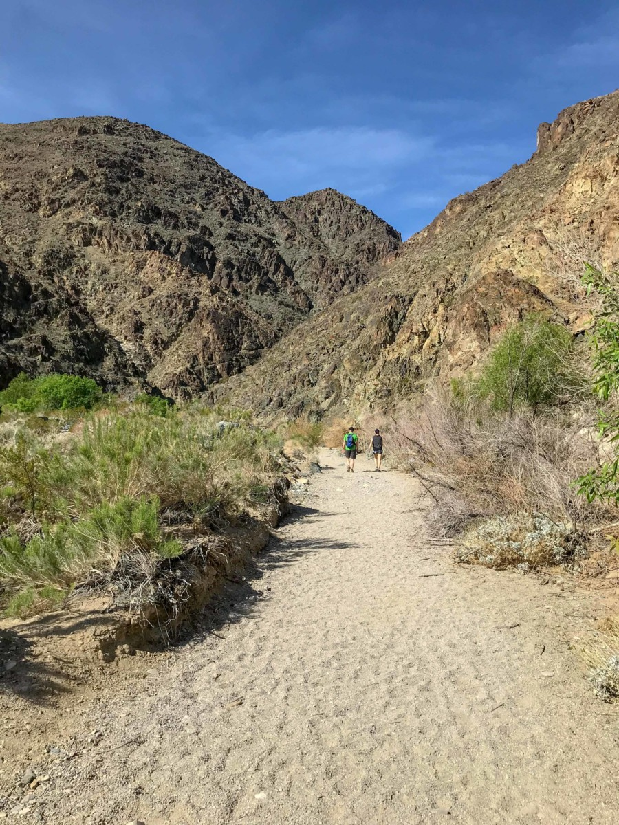 darwin on the trail